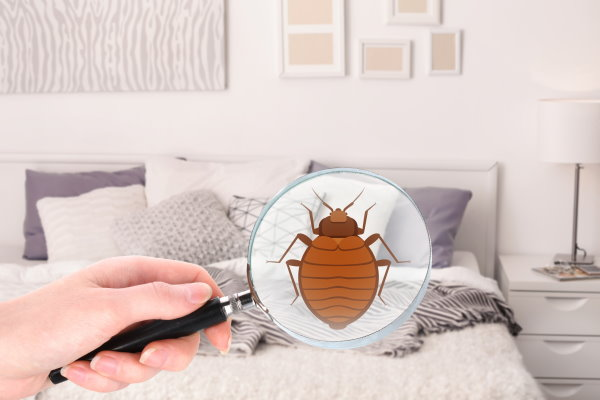 Bed Bug Exterminator in New Jersey