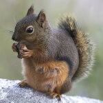 Jack Russell Wildlife Control - Squirrel Removal