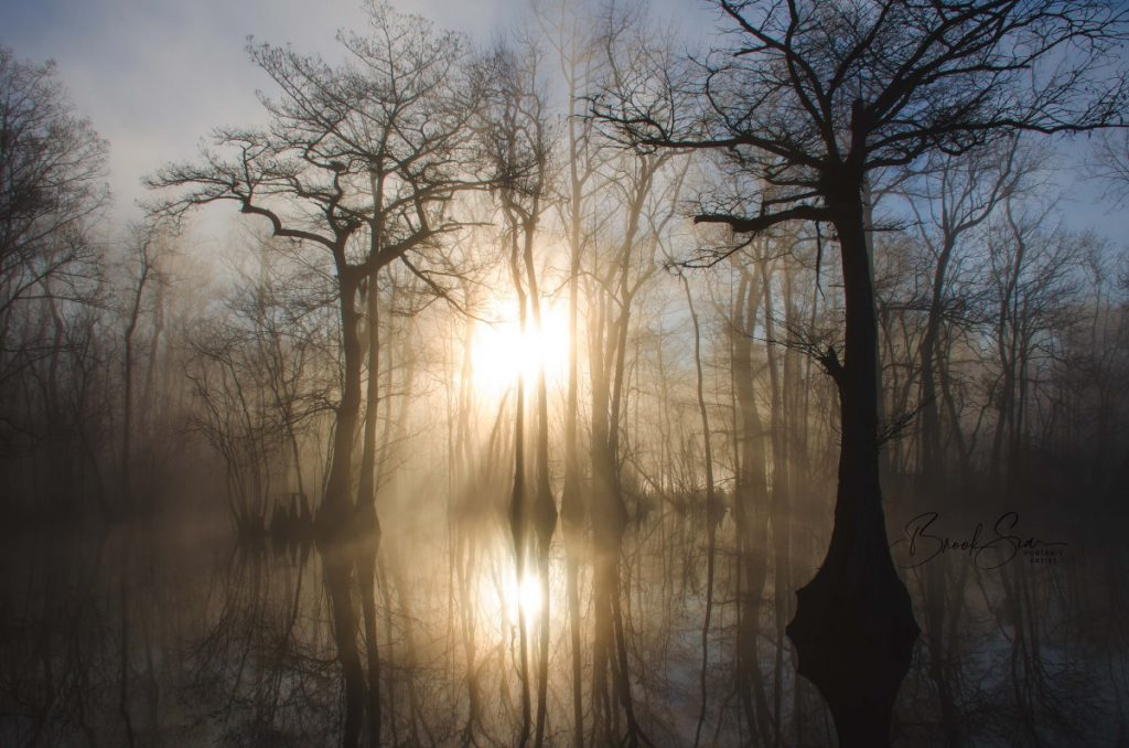 Fog in morning on the yellow river