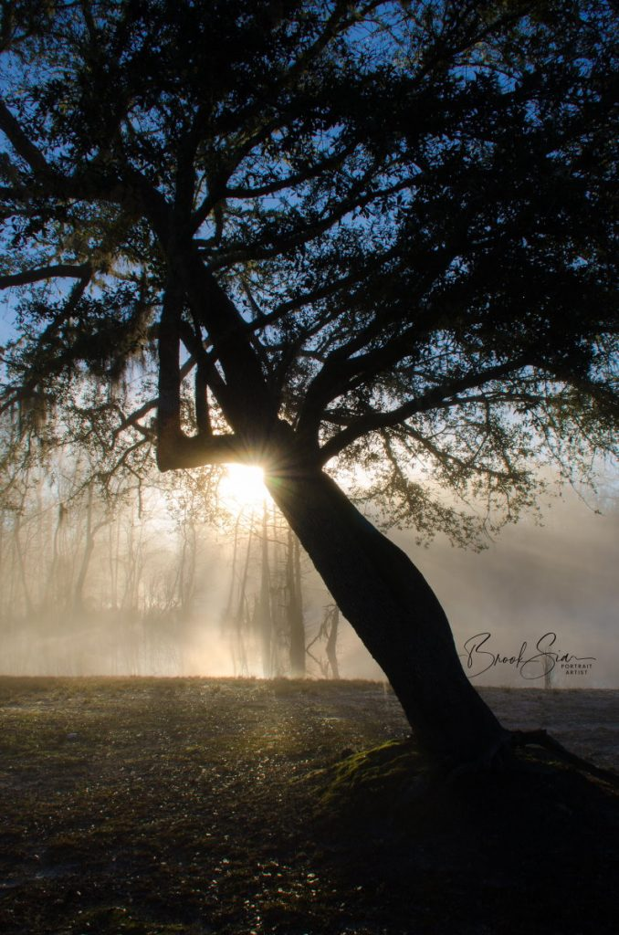 Lone tree in park with fog