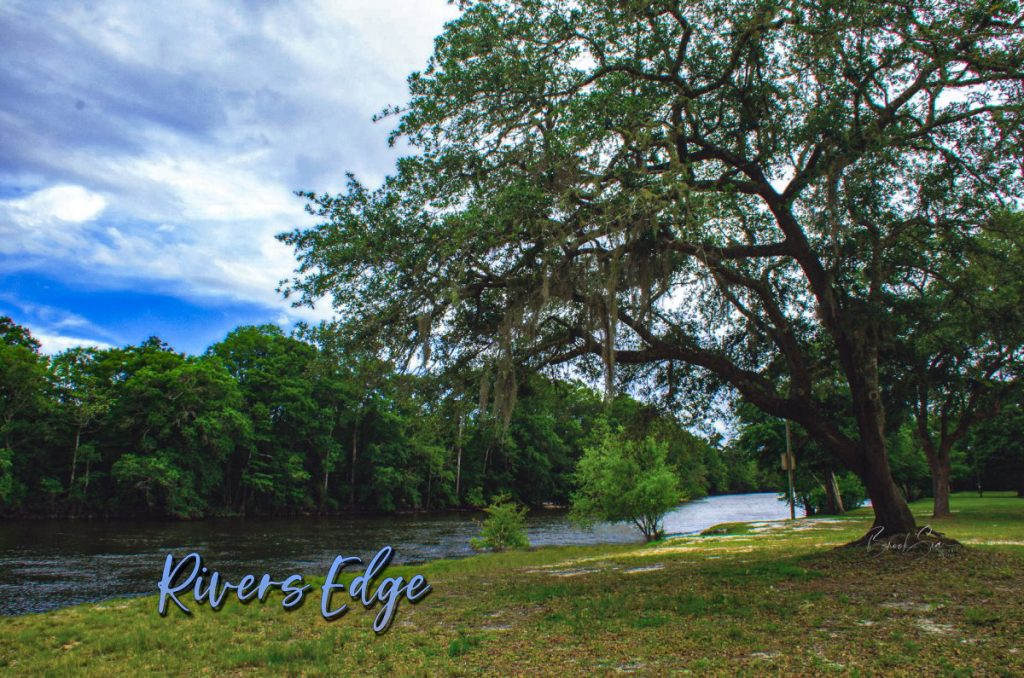 Spanish moss on tree by Yellow River